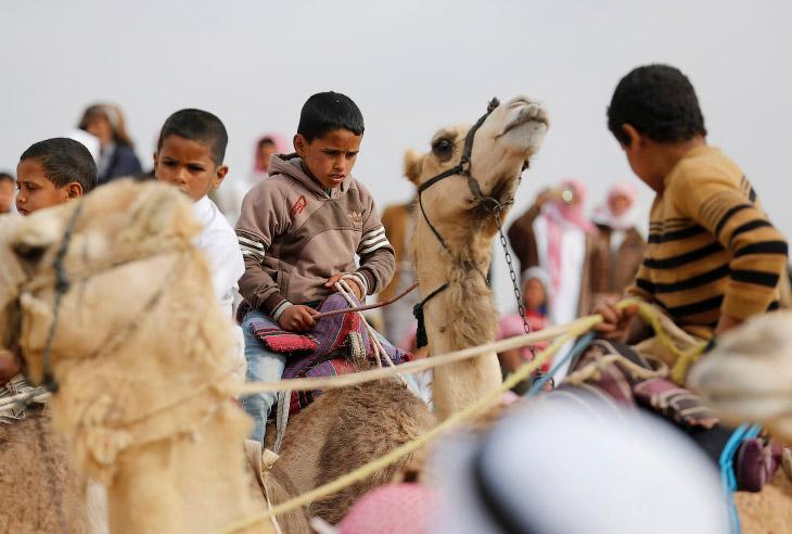 2. Кораблю пустыни не по нраву это мероприятие. (Фото Amr Abdallah Dalsh | Reuters):