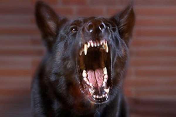 ВМахачкале жители массово отстреливают собак