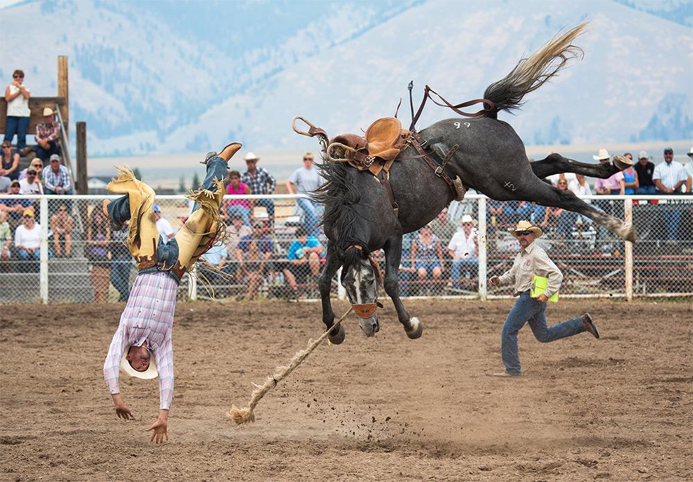 Carol Lynne Fowler (Seeley Lake, Montana). Finalist: Americana. A champion bronco bucks a champion r