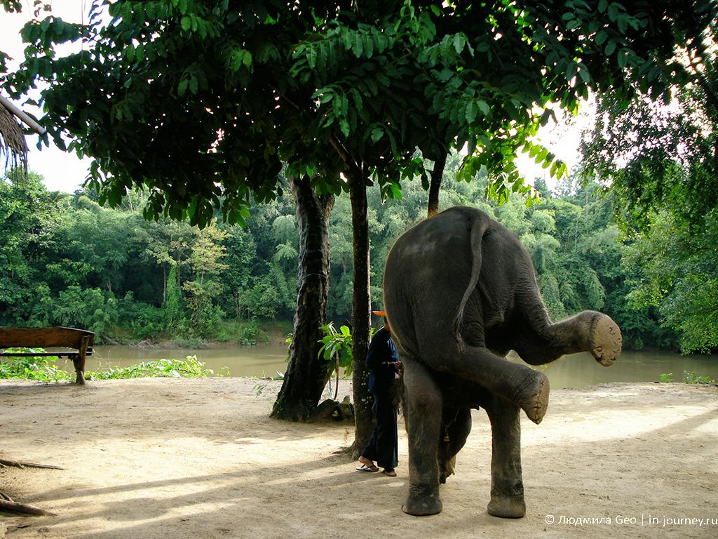 слоновье представление на реке квай