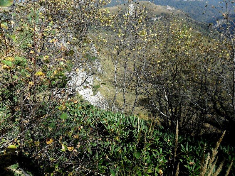В горах, заросли на склоне ... SAM_3347.JPG