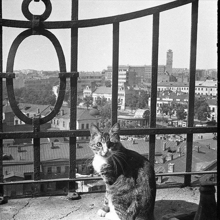 Котик с Остоженки