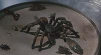 Боязнь пауков / Arachnophobia (1990/BDRip/HDRip)