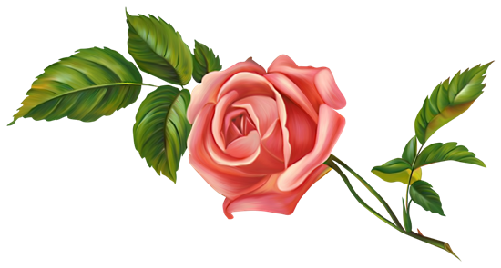 Нарисованная роза на прозрачном фоне
