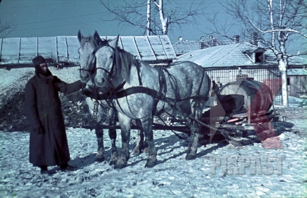 stock-photo-ww2-colour-ukraine-german-wehrmacht-soldier-with-horse-and-supply-sled-winter-7919.jpg