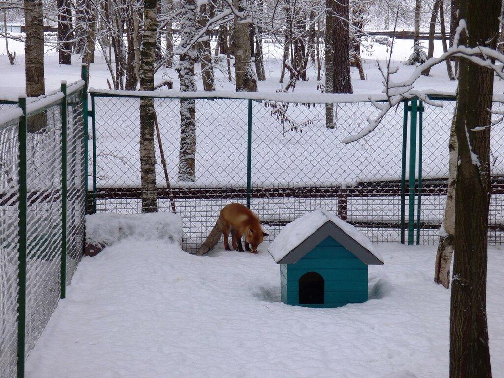 Кострома. Часть 3: сыр и зоопарк :)