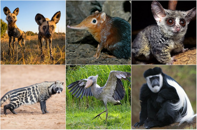 Удивительные животные Африки
