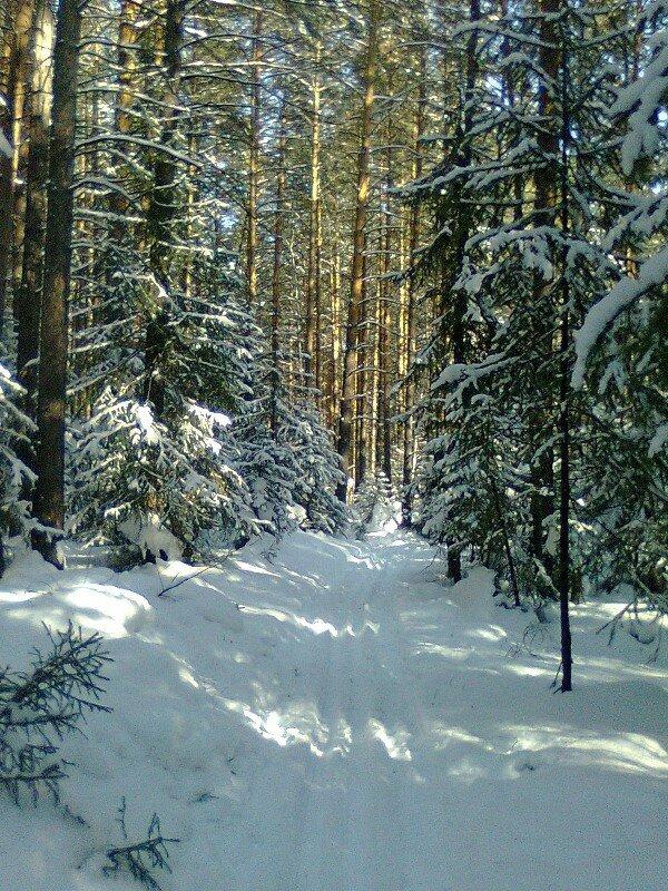 Мартовская лыжня, окрестности Кировграда