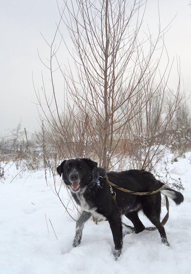 Дживс собака из догпорта