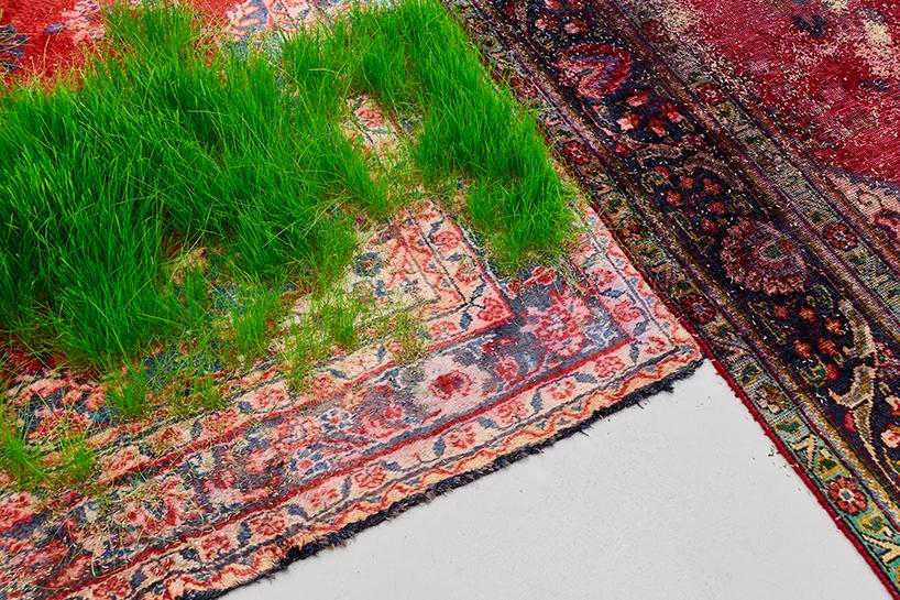Трава проросшая сквозь персидские ковры