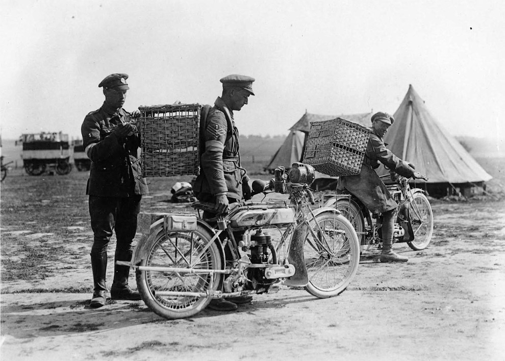 Английские войска на Западном фронте, 1917. Солдаты прикрепляют к птице важное сообщение. (Фото