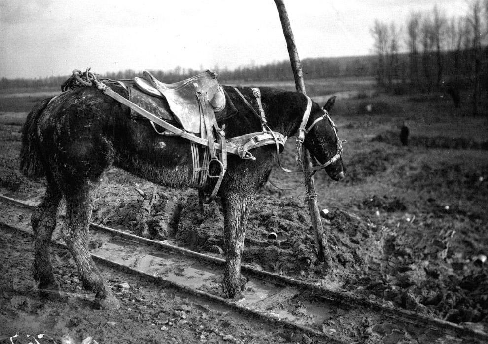 Бельгийские беженцы в Брюсселе и ездовая собака, 1914 год. (Фото Bibliotheque nationale de Fran