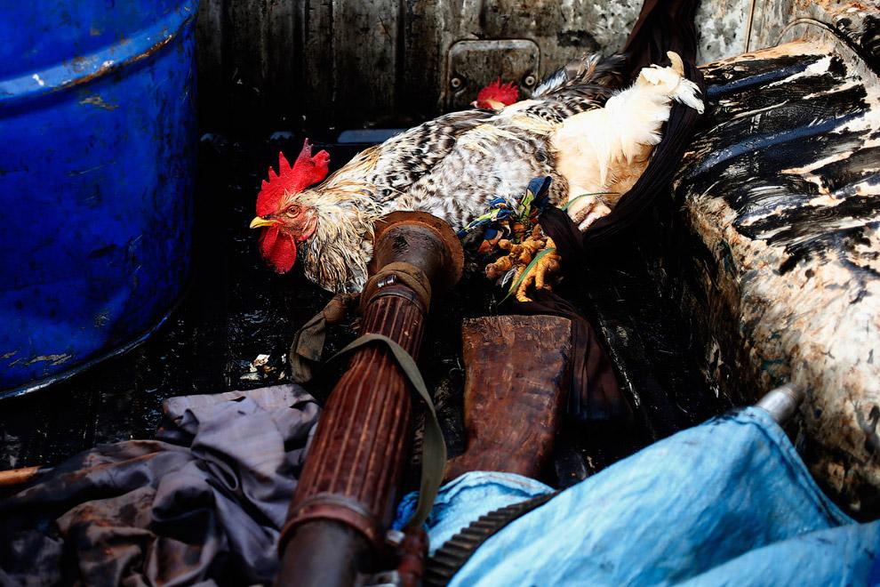 12. Члены племени Пель. В моде все цветастое. (Фото Goran Tomasevic   Reuters):