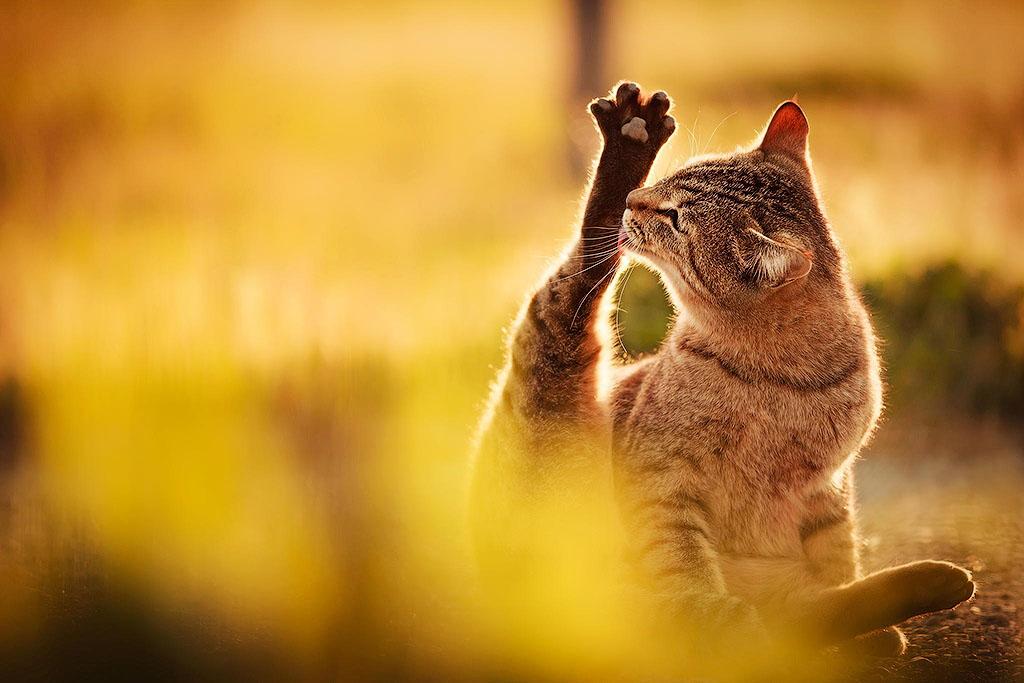 26. Кошка не бреет ноги.