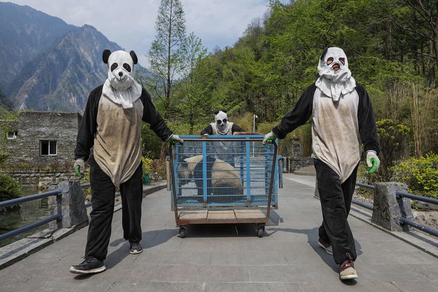 Спецподразделение Панда