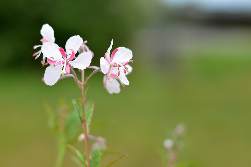 розовый белый свет 3.jpg