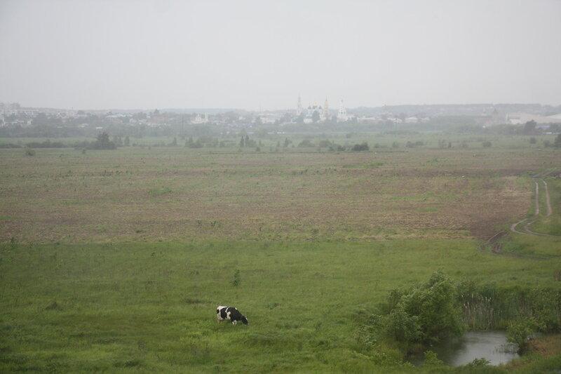 43. Корова и Коломна, Московская область.JPG