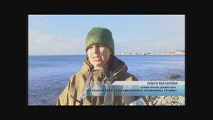 Орнитологи подвели итоги среднезимних учетов водоплавающих