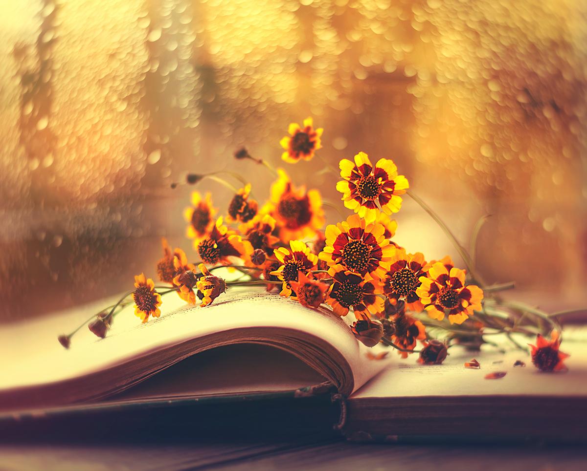 Цветочные истории / Фотограф Ashraful Arefin
