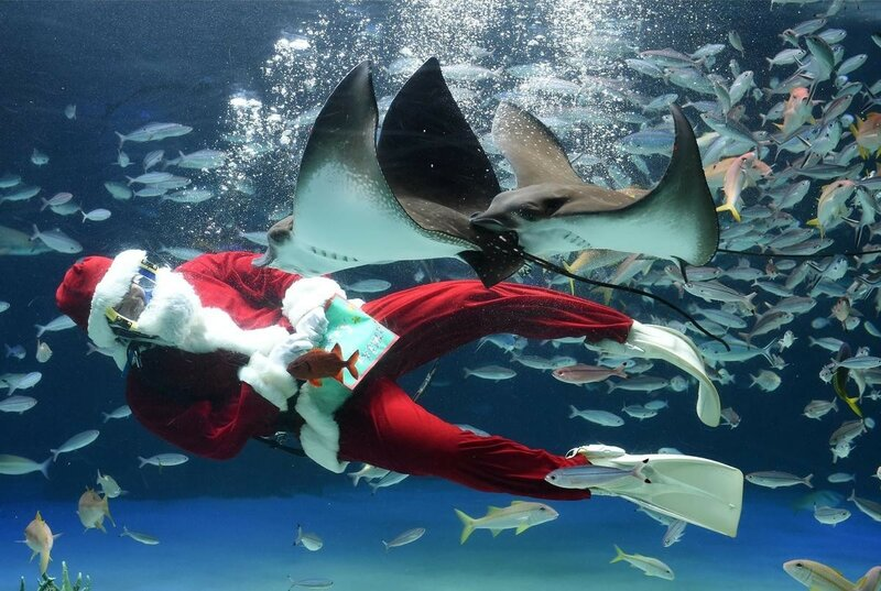 Мисс Земли, Рождество, Олимпиада, черепашки и другие самые интересные фотографии недели!