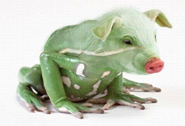 20 фантастических животных гибридов, рожденных Фотошопом