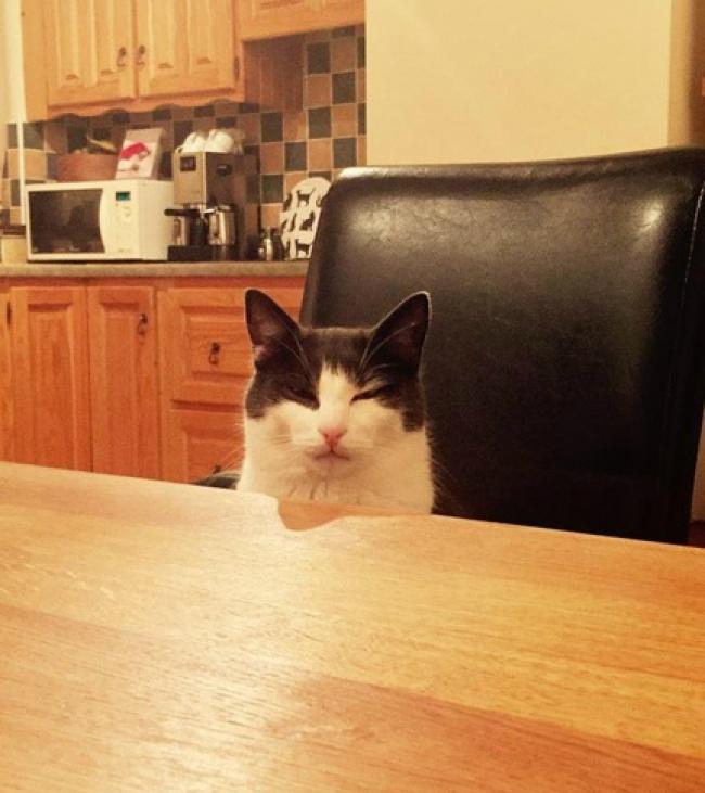 © Matind/reddit.com  Асколько печенек высможете уместить насвоем коте, пока онспит?