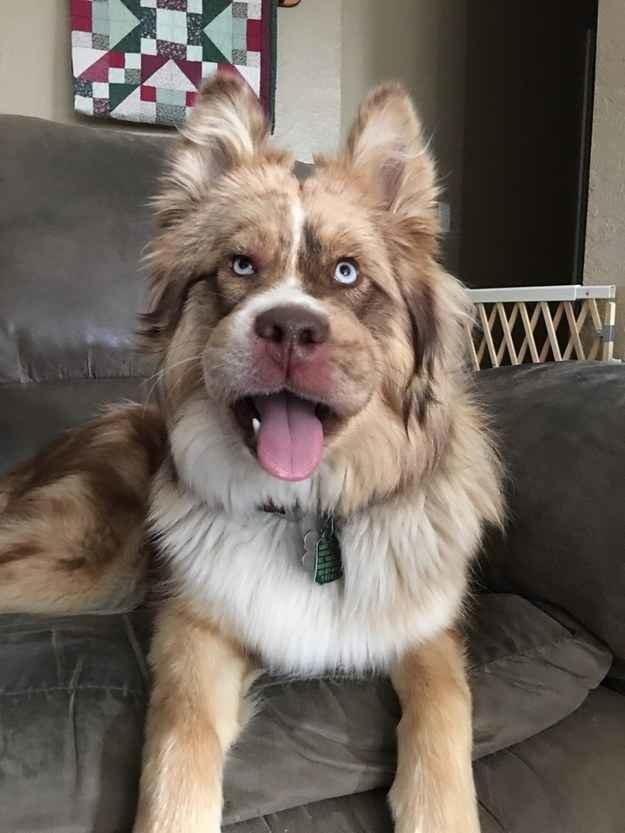 Этот пес явно сейчас недоволен собой.