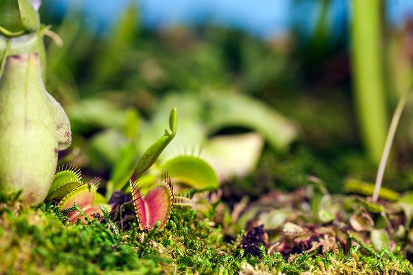 Старые Макинтоши как горшки для растений