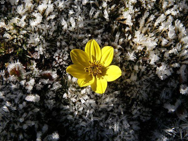 Плато Рорайма – удивительное чудо природы (46 фото