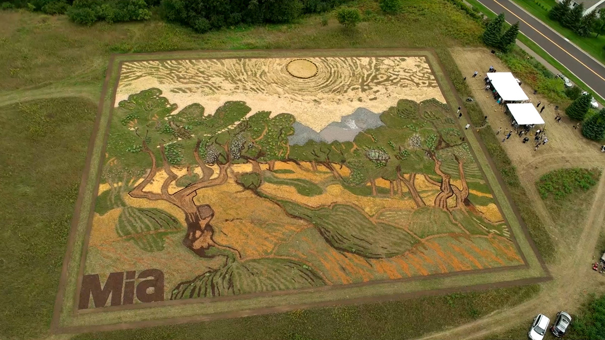 "Artist Stan Herd Plants a 1.2-Acre Field Inspired by Van Gogh's 1889 Painting ""Olive Trees"" (5 pics)"