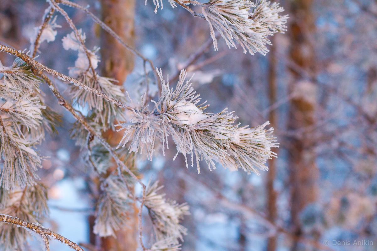 хвалынск зима горнолыжка фото 9