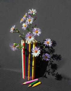 Смотрю на цветы сентябринки...