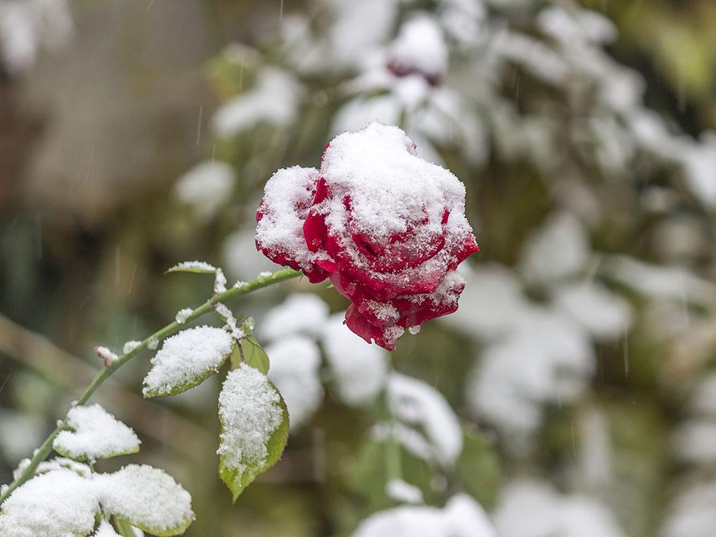 штрихи мэйкапе цветы зима картинки красивые последнее время барная