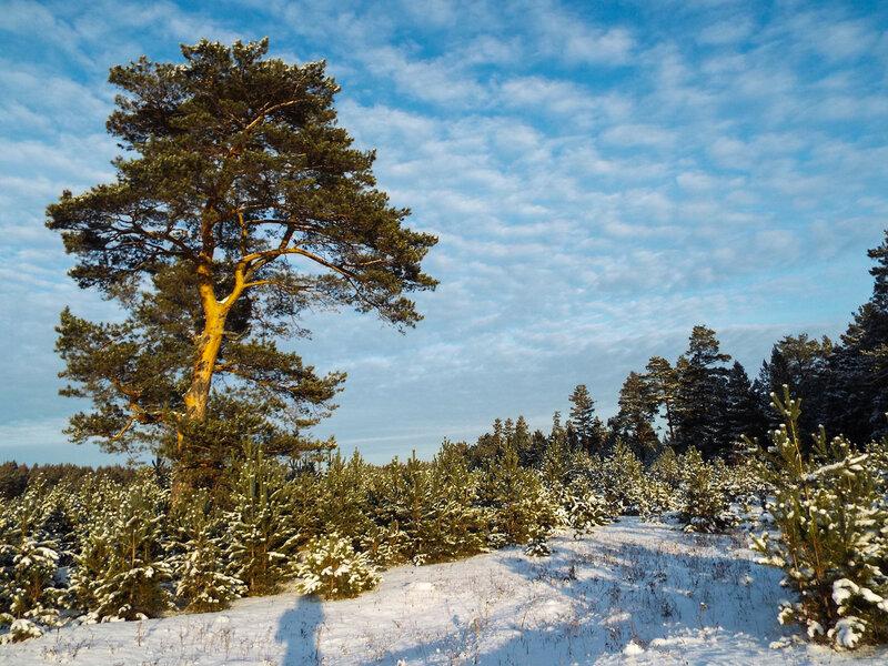 Разве нету цветенья зимы?  Когда снег так искрится лукаво!