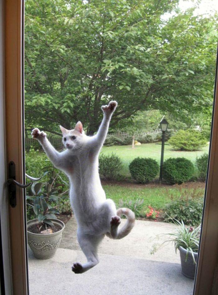 животные за дверью
