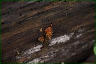 http://img-fotki.yandex.ru/get/198569/15842935.415/0_f16af_630c3741_orig.jpg