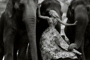 Девушка для слонов