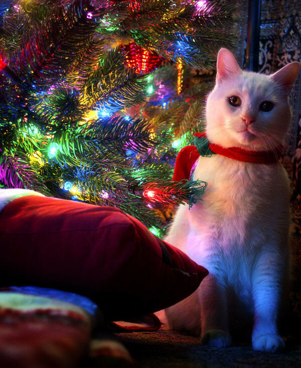 картинки новогодних котов на аву