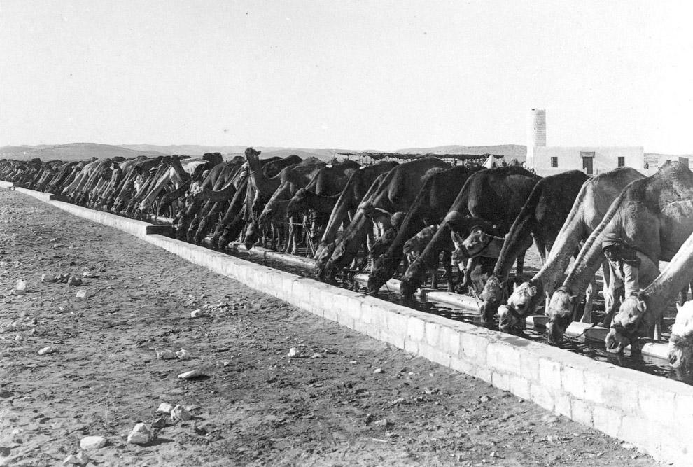 Британский тяжелый танк времен Первой мировой войны Mark V и погибшая лошадь, Франция, 1918. (Ф