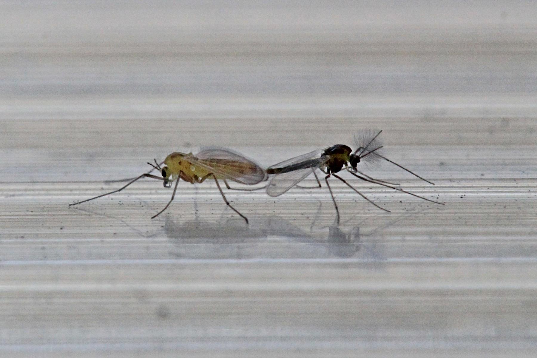 дремучем-дремучем как выглядит самец комара фото спонтанно