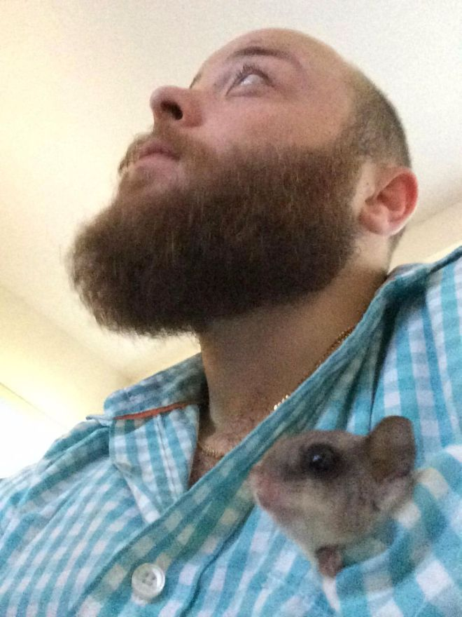 Pictures of the animal comfortably nestled in Daddys shirt pocket are quite likely the most ador