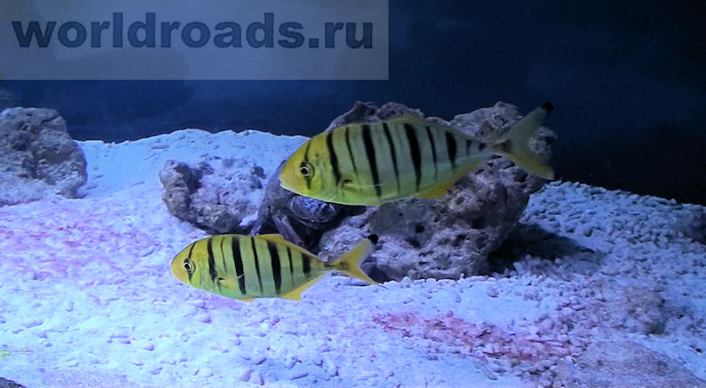 Океанариум в Архипо-Осиповке