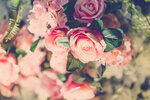 Beautiful flowers for valentines and wedding scene .  ( Filtered image processed vintage effect. )