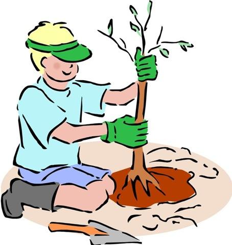 14 мая Всероссийский день посадки леса. Высадка дерева