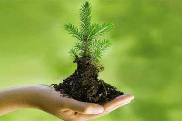 14 мая Всероссийский день посадки леса