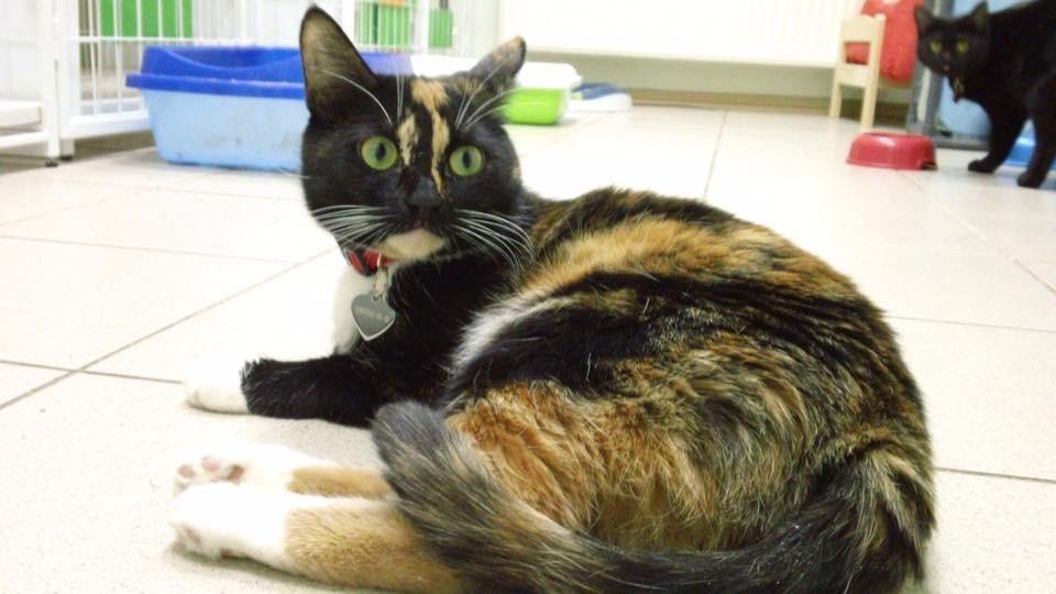 Марфа кошка из приюта догпорта