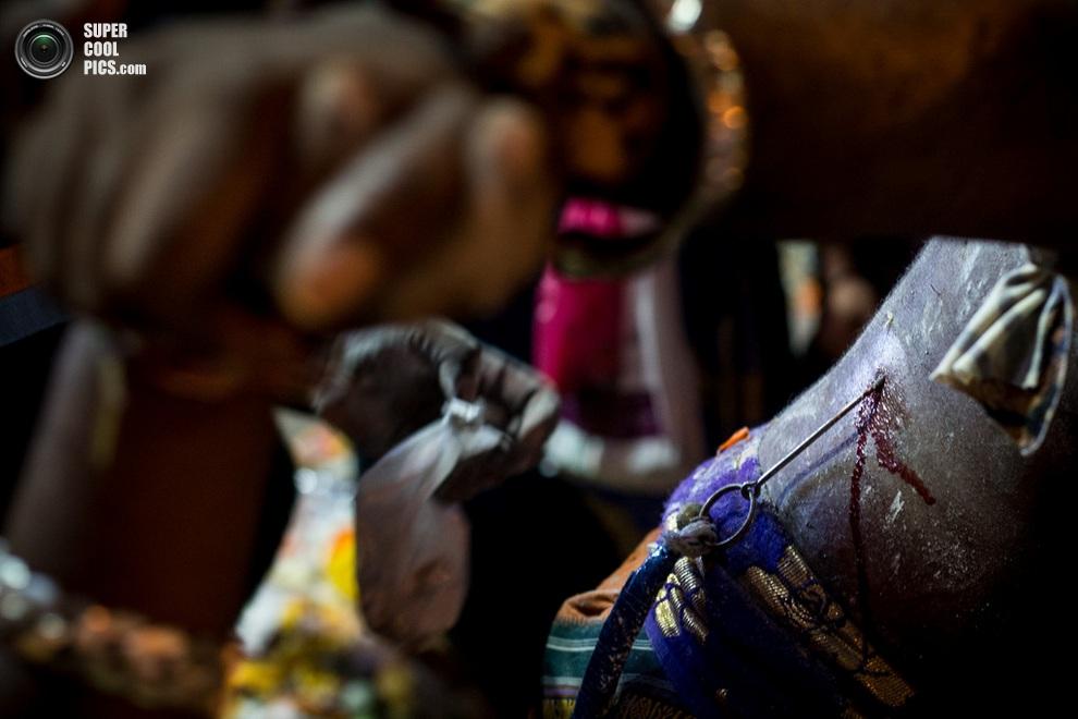 Люди снимают крюки с верующего, который исполнял ритуальный танец кавади. (Chris McGrath/Getty I