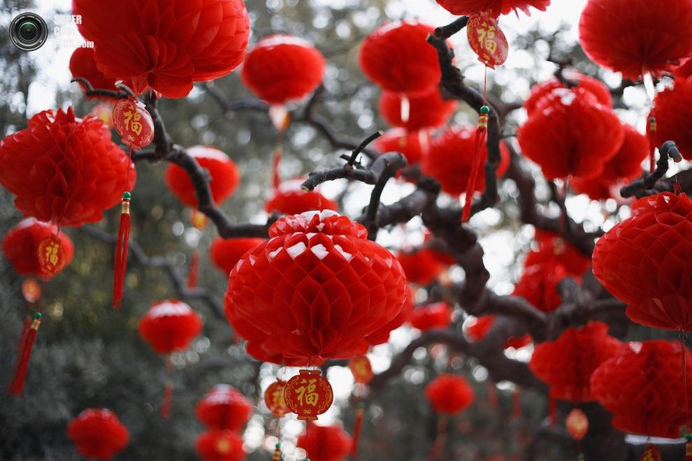 Деревья в Пекине, украшенные красными бумажными фонариками. (Lintao Zhang/Getty Images)