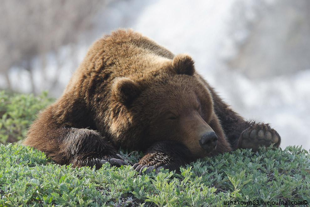 12. Вот любоваться можно, это всегда пожалуйста! Но только пока эта мощь спит.