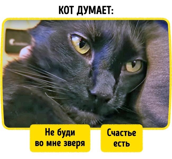 Тест: Насколько хорошо выпонимаете кошачий язык?